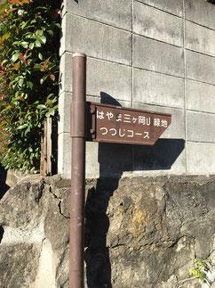 葉山・山楽会「樹木ウォッチング」