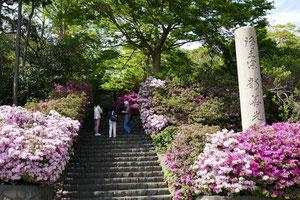 NPO法人 葉山環境文化デザイン集団